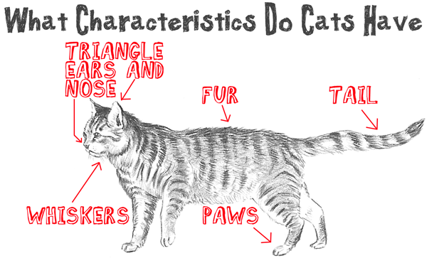 Big Guide To Drawing Cartoon Cats With Basic Shapes For