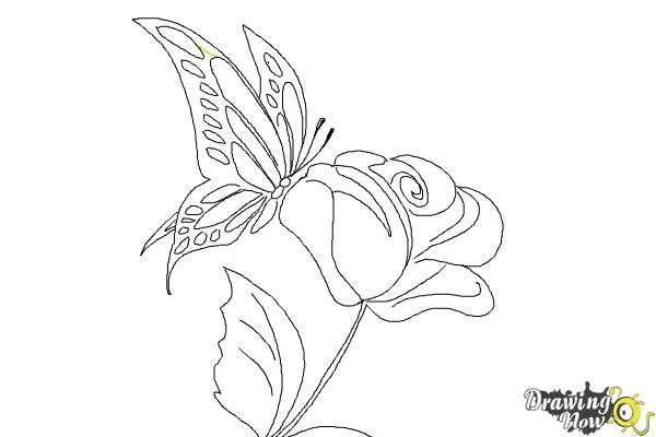 How to Draw a Butterfly On a Flower - DrawingNow