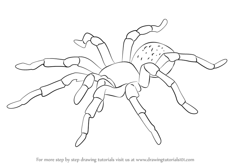 Tarantula Coloring Page - Eskayalitim