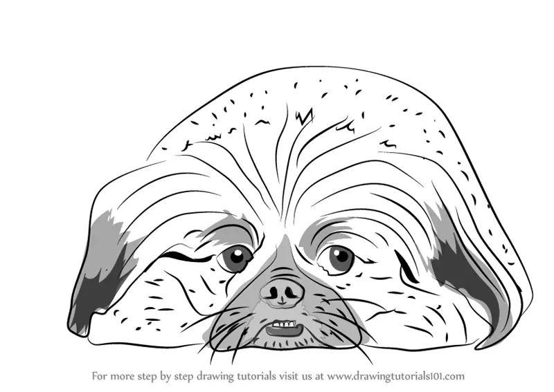dog drawings easy