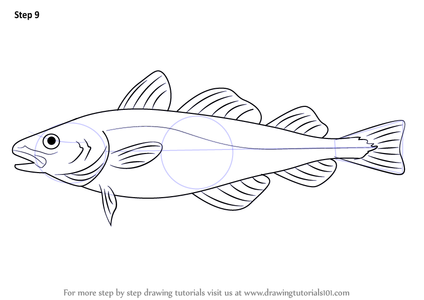 Step By Step How To Draw An Atlantic Cod