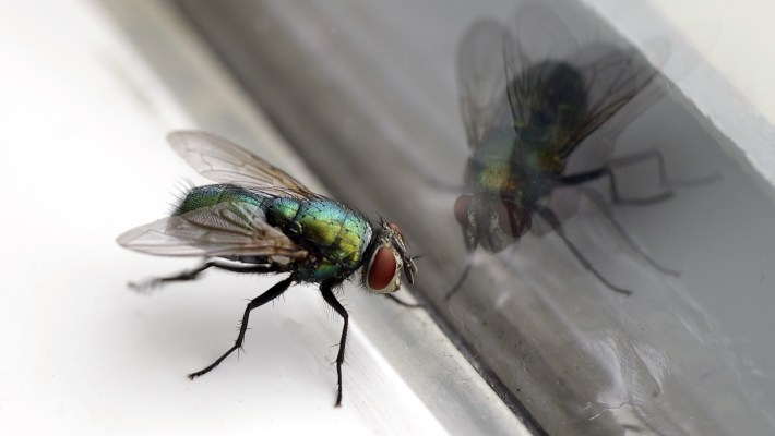 The Fly in the Window: When the Help We Want Isn't the Help We Need