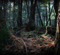 Anchor Bay Heads to the Aokigahara Suicide Forest for Grave Halloween