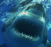 Shark Week: 8 Shark Attack Horror Movies Currently Available for Instant Streaming on Netflix