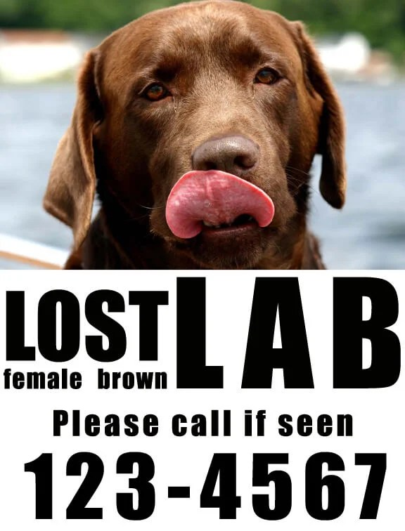 8 Tips to Make a Great Missing Pet Poster - Dream a Little Bigger - make a missing poster