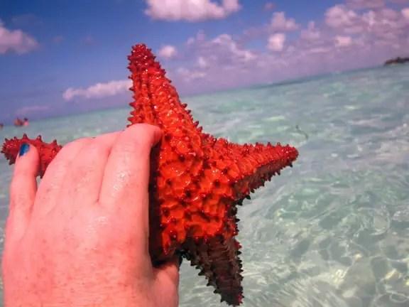 Saona Island, Dominican Republic holding starfish