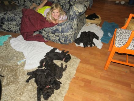 6 week old Labradoodles and 8 year old Olivia have a slumber party..looks like she wore them out first