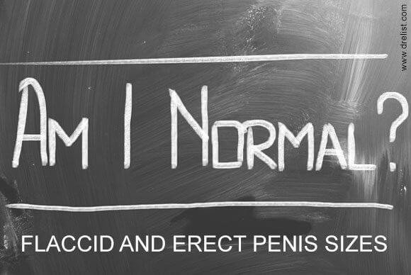 Flaccid and Erect Penis Sizes Image