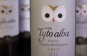 Tyto-Alba-7