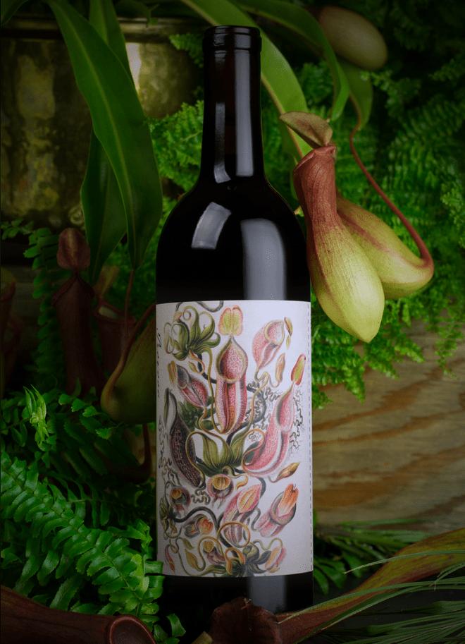 provoca-wine-4
