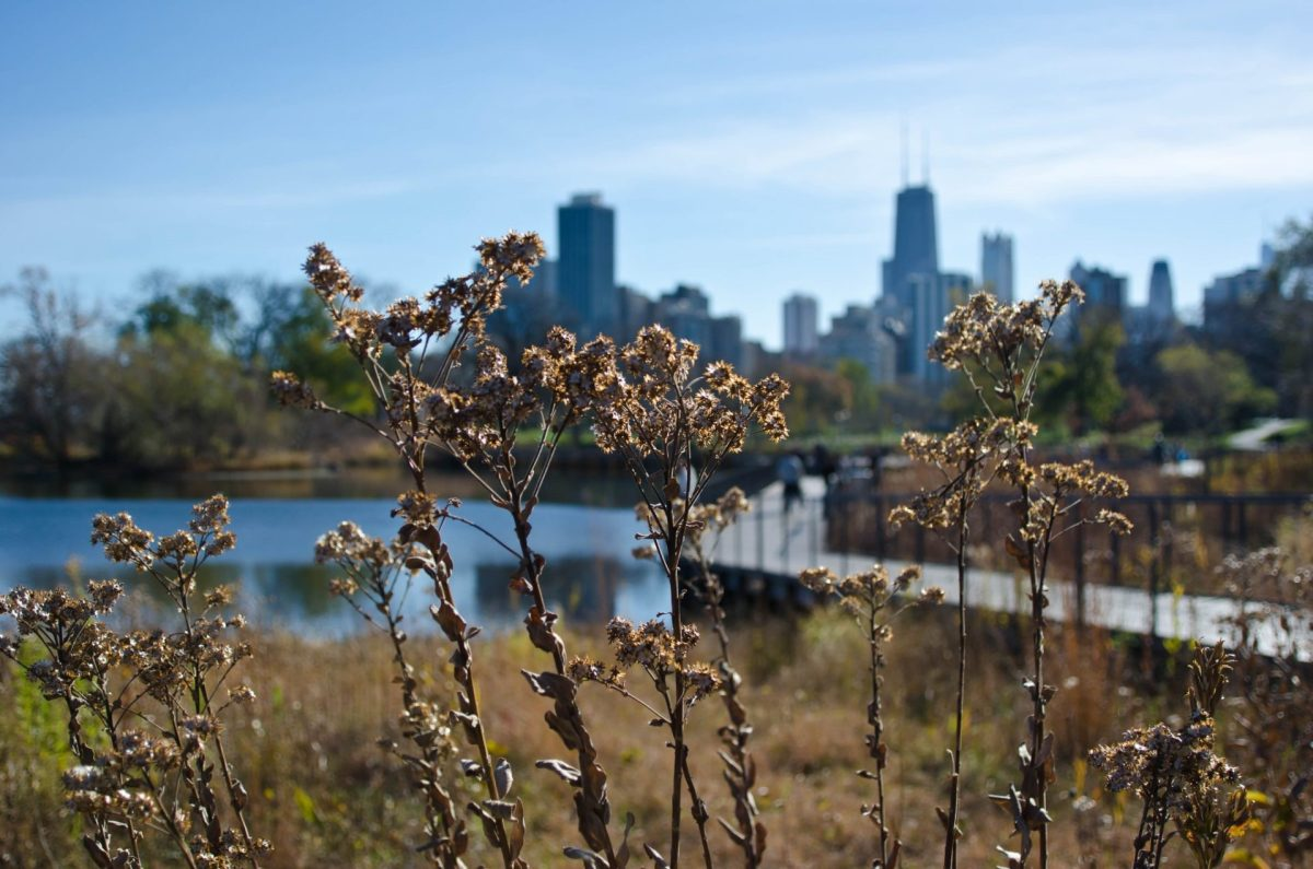 Lincoln Park. Photo by hey tiffany! via Flickr CC