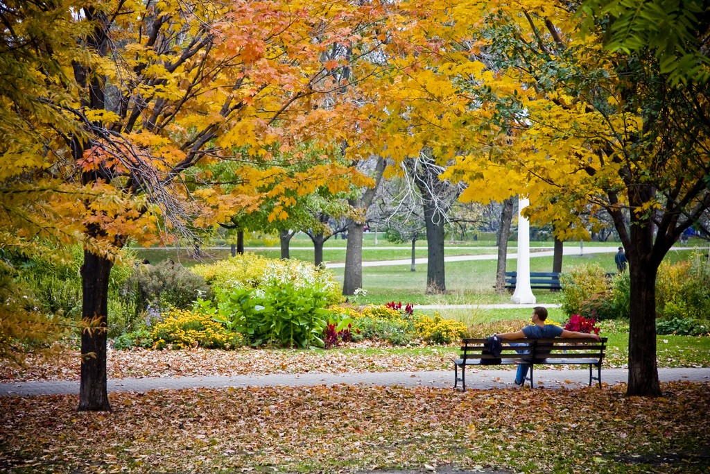 Fall in Chicago. Photo by Rebecca Peplinski via Flickr CC