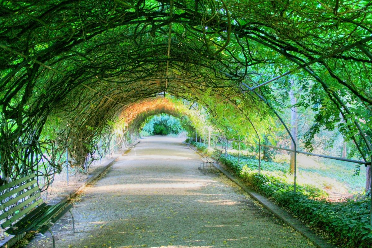 Green Tunnel, Adelaide Botanic Gardens. Photo by Georgie Sharp via Flickr CC