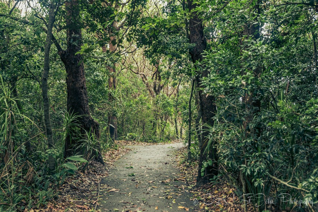 Inside the Sea Acres Nature Reserve, Port Macquarie, NSW