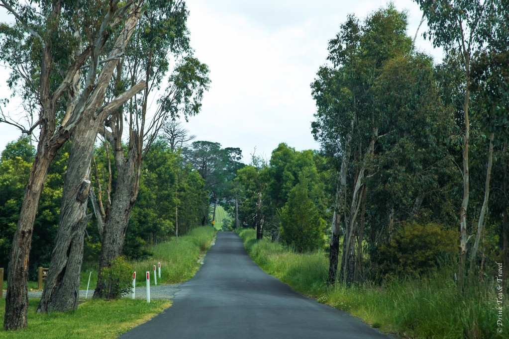 On the way to Yarra Valley