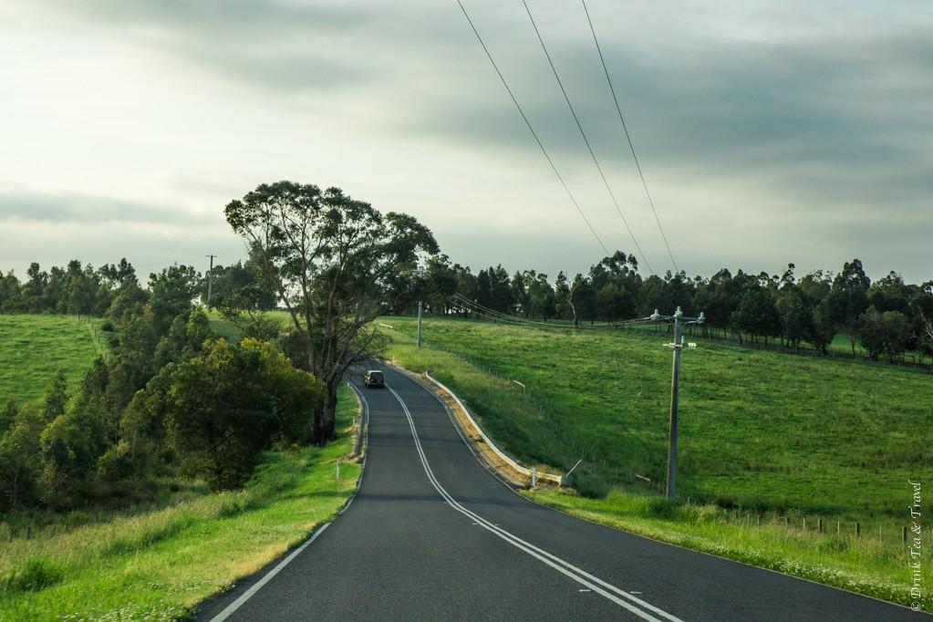 Beautiful drive in Yarra Valley