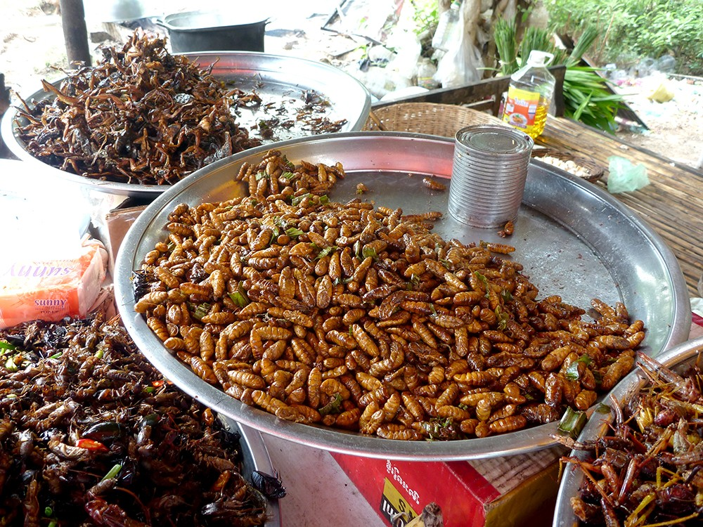 Cambodia Insect Stand