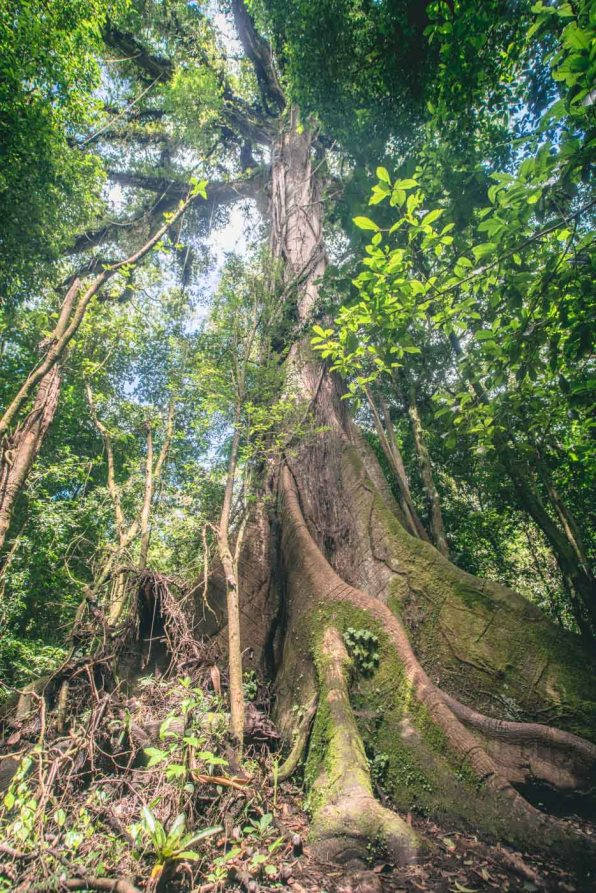 costa-rica-arenal-national-park-4092