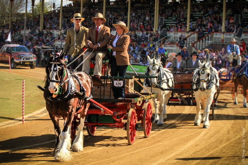 Beautiful horse and carriage at the Royal Queensland Show
