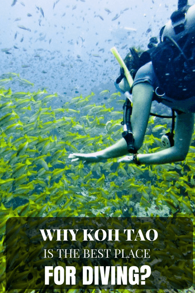 There is something about Koh Tao that makes it one of the top Thailand destinations for many backpackers from around the world. Koh Tao is a divers paradise...