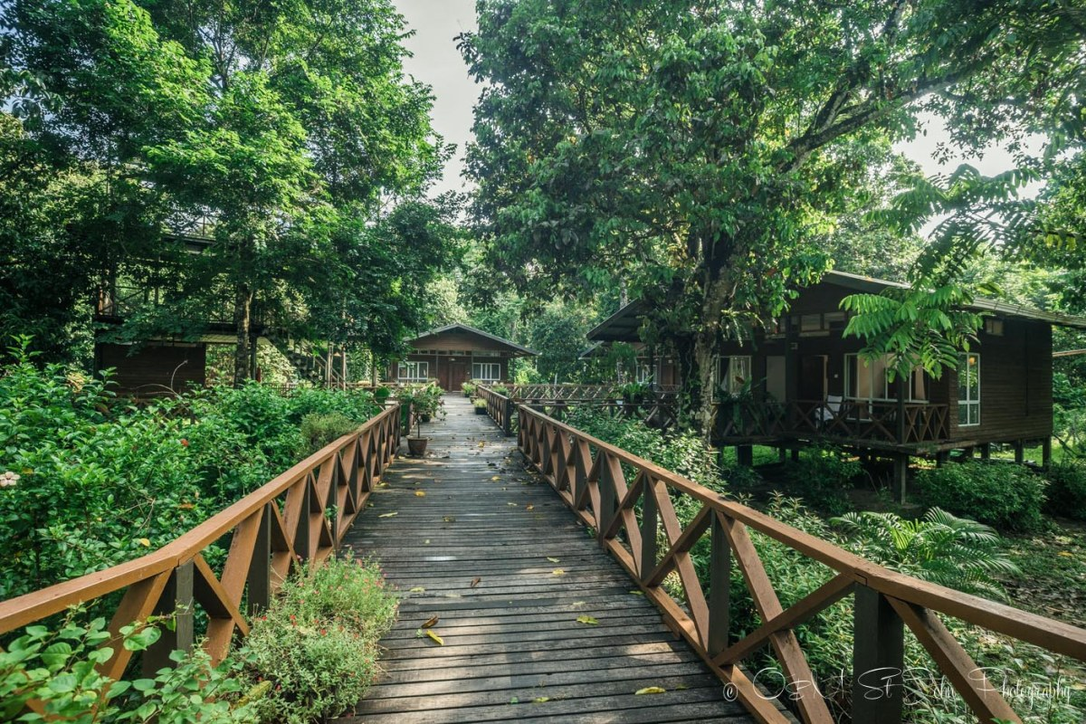 Borneo Nature Lodge on Kinabatangan River. Sabah. Malaysia