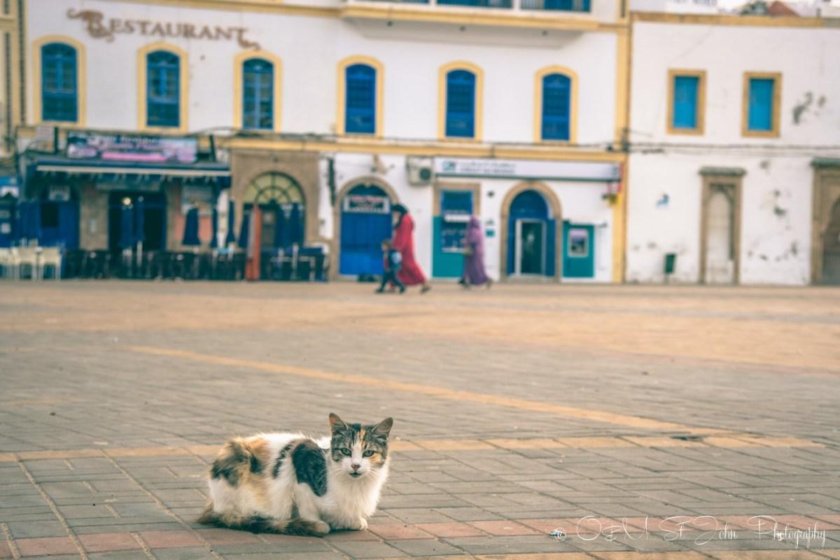 Cat in Essaouira, Morocco