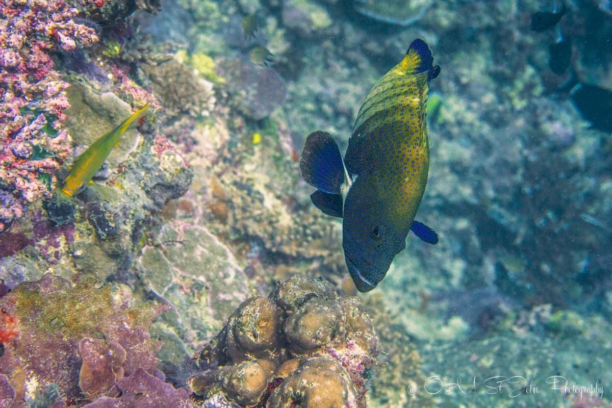 Diving in Sipadan Island, Sabah. Malaysia. Borneo
