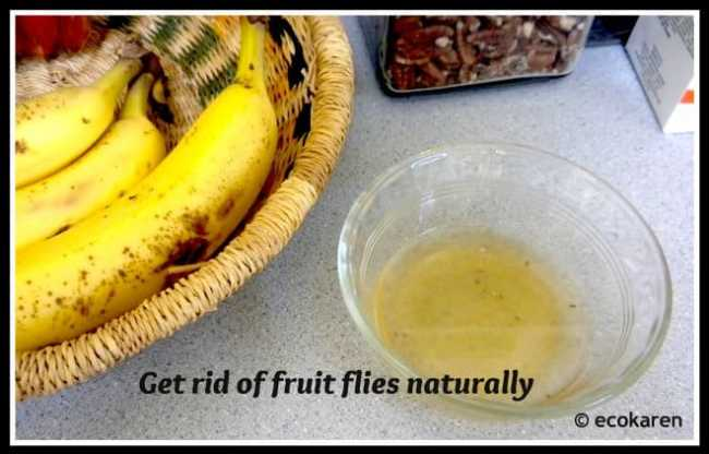 get rid of fruite flies naturally