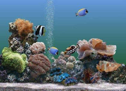 Coral Fish 3d Live Wallpaper Temi E Sfondi Windows Per Personalizzare La Grafica Del