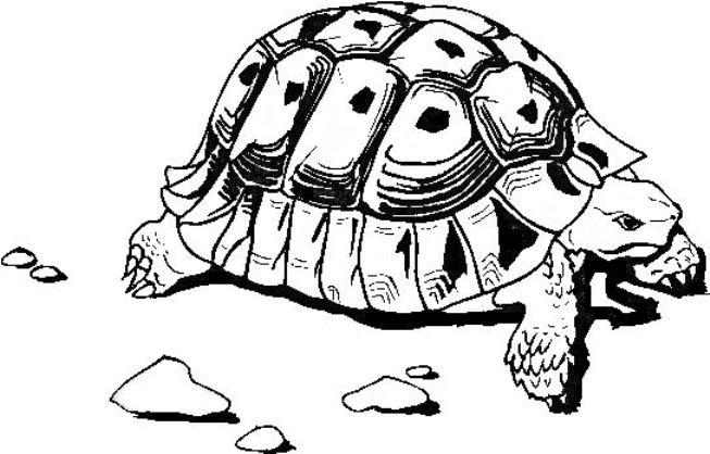 tartarughe disegni per bambini da stampare