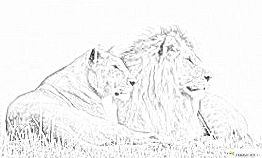 Leone disegno da stampare e colorare per bambini for Lepre immagini da stampare