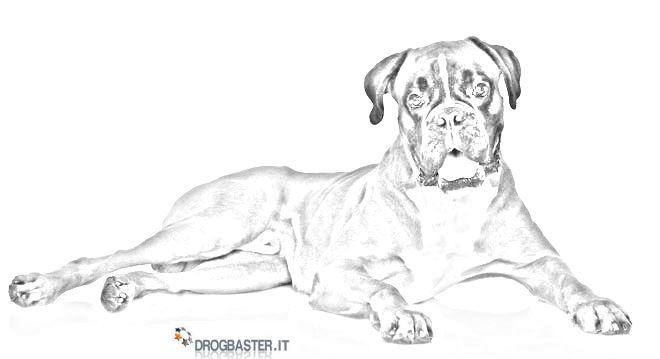 disegni da colorare di cani boxer