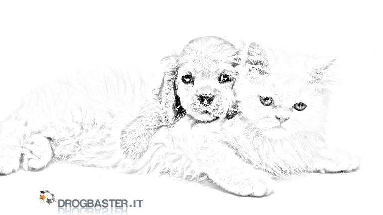 Cani disegni da stampare e colorare for Cani e gatti da stampare e colorare