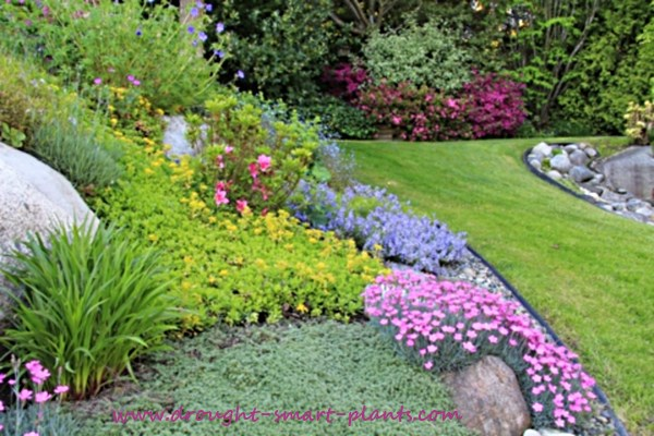 Buy Flower Garden Plans - let me help design your drought tolerant - drought tolerant garden designs
