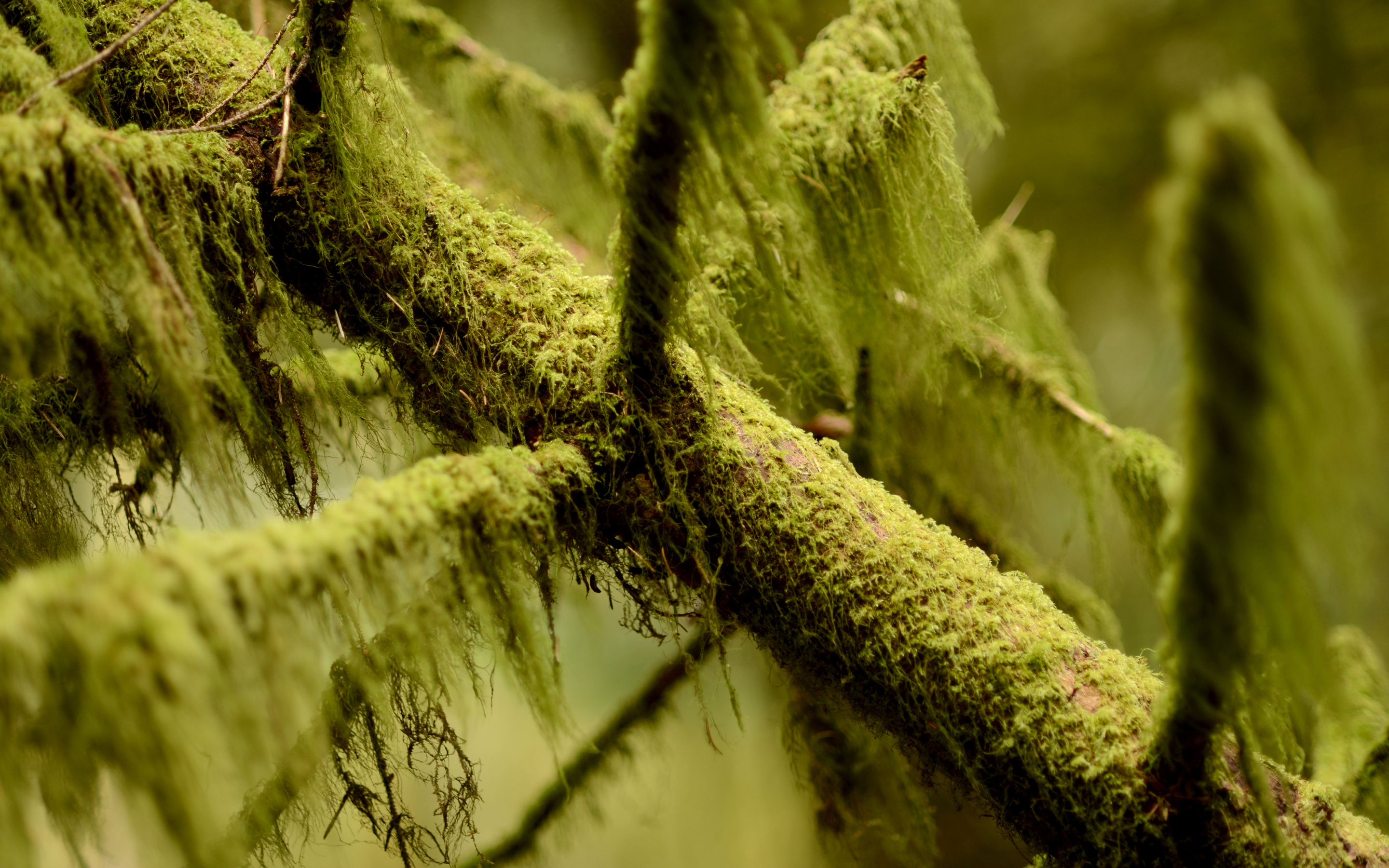 Oregon Wallpaper For Iphone Mossy Branch By Traveling Julie Dsktps