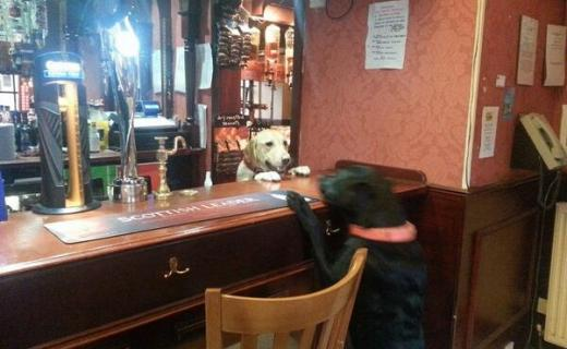 woof can i have a bowl of water and a bonio please - terri Gardner