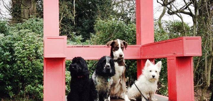 Vogrie Park Gorebridge dog walk