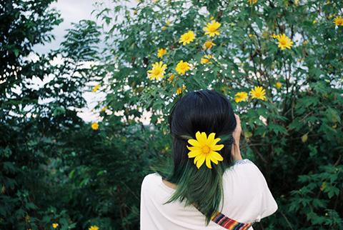 Hoa dã quỳ Lạng Sơn