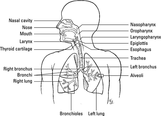 medical terminology body diagram