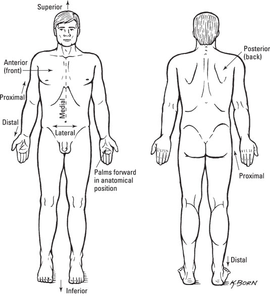 Standard Anatomical Position - dummies