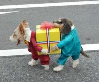 pet costumes, funny dogs
