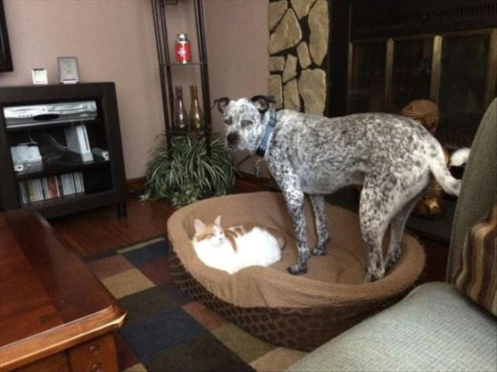 cats and dog beds (3)