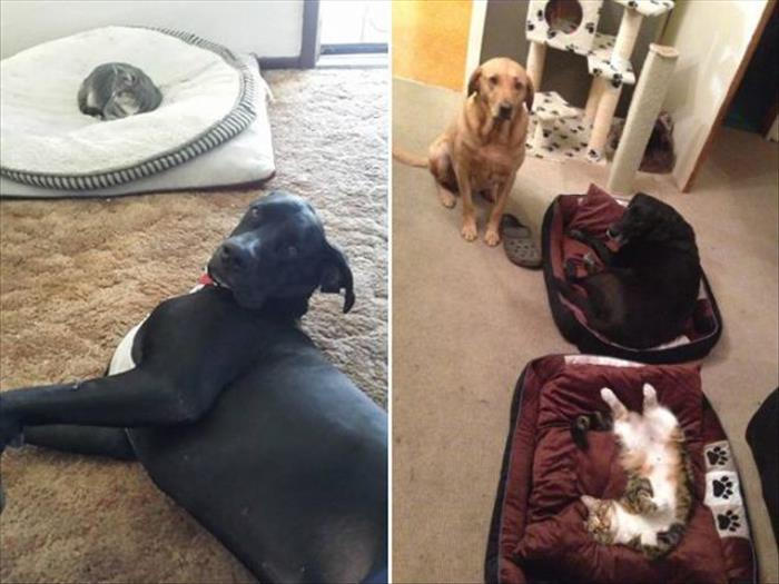 cats and dog beds (9)