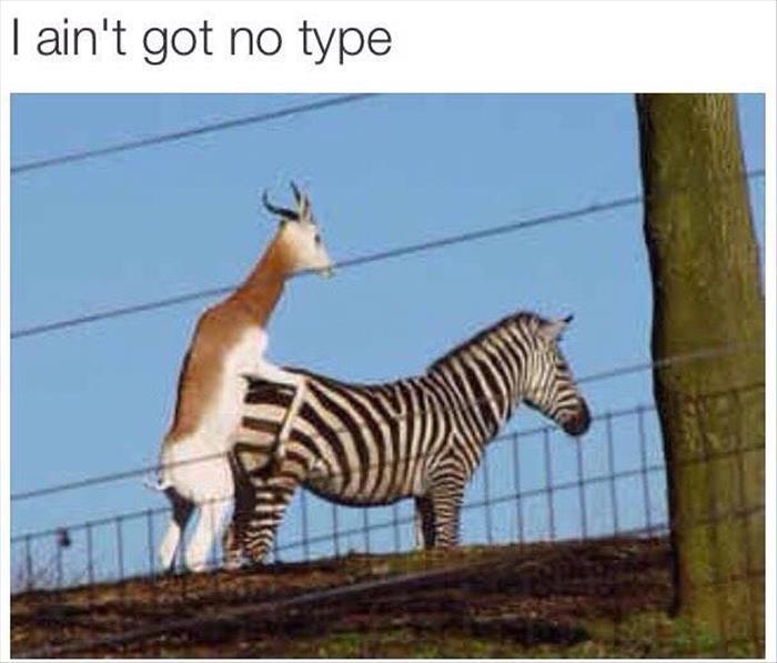 funny animals (432)