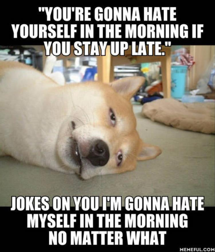 Funny Facebook Wallpaper Quotes Funny Animal Pictures Of The Day 24 Pics