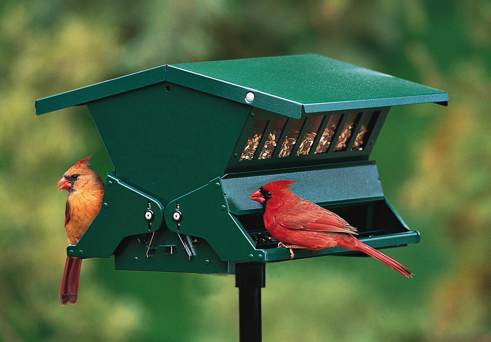 Duncraftcom Absolute Ii Squirrel Proof Bird Feeder