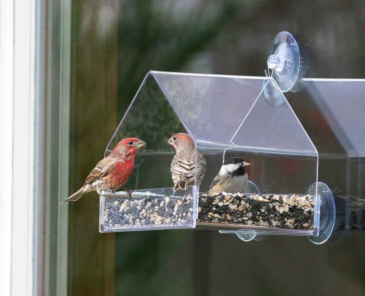 Duncraft window chalet bird feeder