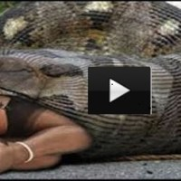 Giant Python eats drunk man alive in India? Fake Or real?