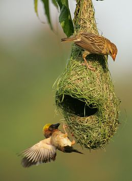 Couple Wallpaper Hd With Quotes Huge Nest Dusky S Wonders