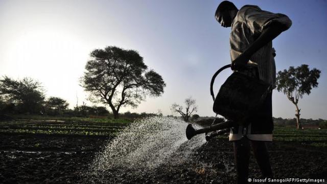 Poljoprivreda u Africi ima još puno potencijala